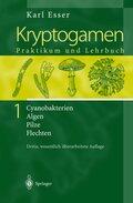 Kryptogamen: Cyanobakterien Algen Pilze Flechten. Praktikum und Lehrbuch; Bd.1