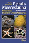 Farbatlas Meeresfauna, 2 Bde.: Niedere Tiere; Bd.1
