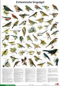Schreiber Naturtafeln: Einheimische Singvögel