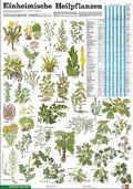Schreiber Naturtafeln: Einheimische Heilpflanzen