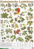 Schreiber Naturtafeln: Einheimische Laubbäume