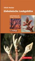 Einheimische Laubgehölze nach Knospen und Zweigen bestimmen