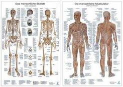 Muskelsystem, Lerntafel; Skelettsystem, Lerntafel, 2 Tafeln