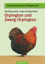 Orpington und Zwerg-Orpington