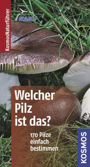 Welcher Pilz ist das?