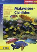 Malawisee-Cichliden