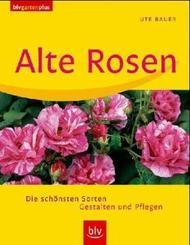 Alte Rosen