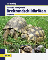 Ihr Hobby Breitrandschildkröten