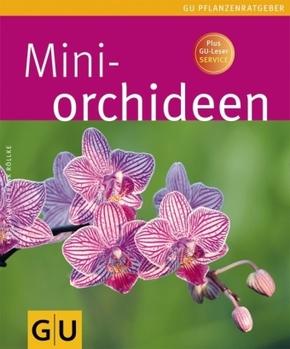 Miniorchideen
