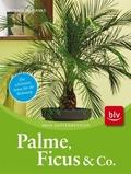 Palme, Ficus und Co.