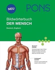 PONS Bildwörterbuch Der Mensch