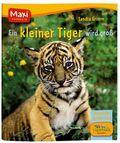 Ein kleiner Tiger wird groß - Maxi Bilderbuch