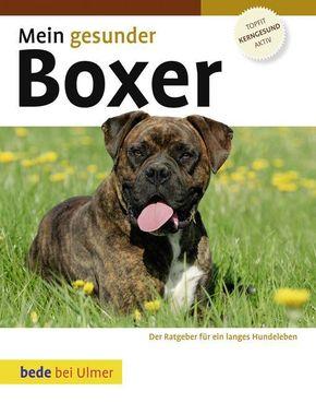 Mein gesunder Boxer