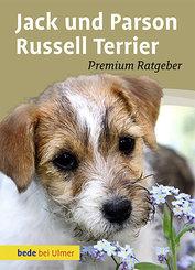 Jack und Parson Russell Terrier
