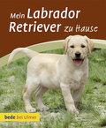 Mein Labrador Retriever zu Hause