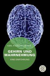 Gehirn und Wahrnehmung