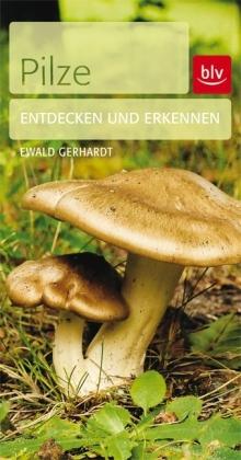 Pilze - Entdecken und erkennen