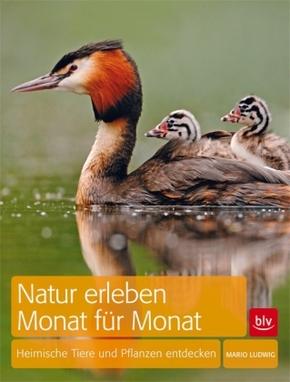 Natur erleben Monat für Monat - Heimische Tiere und Pflanzen entdecken