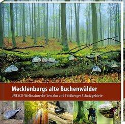 Mecklenburgs alte Buchenwälder