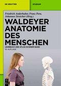 Waldeyer Anatomie des Menschen