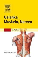 Gelenke, Muskeln, Nerven