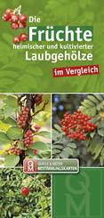 Die Früchte heimischer und kultivierter Laubgehölze im Vergleich