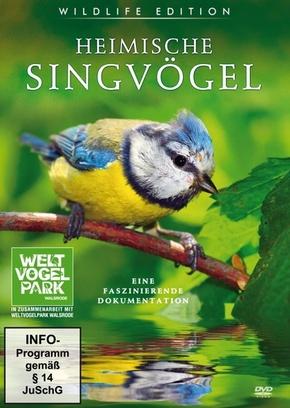 Heimische Singvögel, 1 DVD