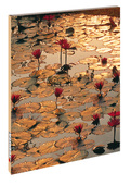 Blankbook: Brombeeren; Nr.RB906