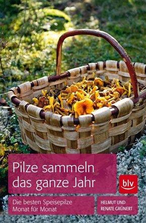 Pilze sammeln das ganze Jahr