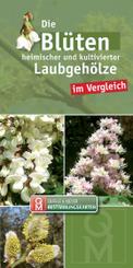 Die Blüten heimischer Laubgehölze im Vergleich