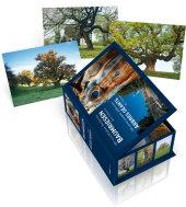 Baumriesen der Schweiz - Postkartenbox