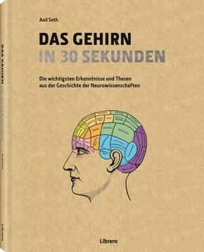 Das Gehirn in 30 Sekunden