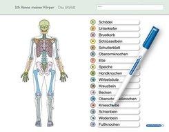 Ich kenne meinen Körper - Das Skelett