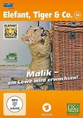 Elefant, Tiger & Co. 38 Malik, ein Löwe wird erwachsen, 1 DVD - Tl.38