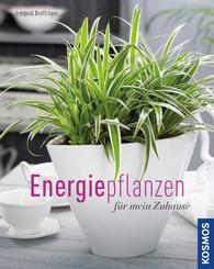 Energiepflanzen für mein Zuhause