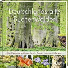 Deutschlands alte Buchenwälder