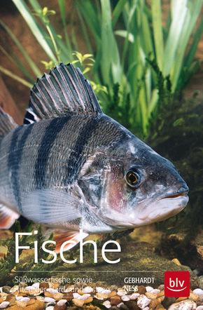 Fische - Süßwasserfische sowie Arten der Nord- und Ostsee