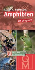 Heimische Amphibien im Vergleich, Bestimmungskarten