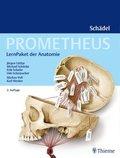 Prometheus Schädel, LernPaket der Anatomie