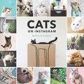 Cats on Instagram