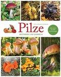 Pilze - Bestimmen und Sammeln