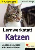 Lernwerkstatt Katzen