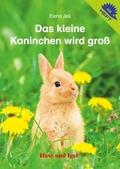 Das kleine Kaninchen wird groß