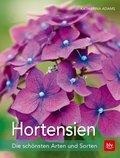 Hortensien