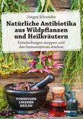 Natürliche Antibiotika aus Wildpflanzen und Heilkräutern