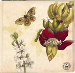 Kew Gardens - Untersetzer Motiv Schmetterling, 2er Set
