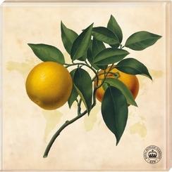 Kew Gardens - Untersetzer Motiv Orange, 2er Set