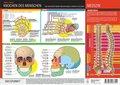 Knochen des Menschen, 1 Info-Tafel