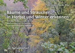 Bäume und Sträucher in Herbst und Winter erkennen