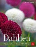 Dahlien